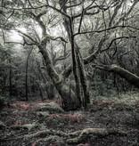 Stefan Hefele Edition 2 Fotobehang Komar - Natuur behang DAS MODEL