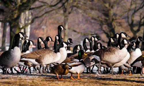 Artgerechte Produkte für Ihre Gänse & Enten
