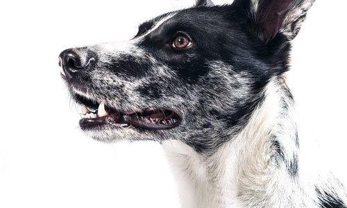 Hundefutter