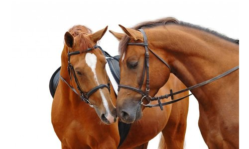 Unser Pferdefuttersortiment