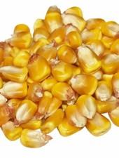 Kügler-Mühle Mais