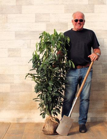 Haagplanten tot 180 cm