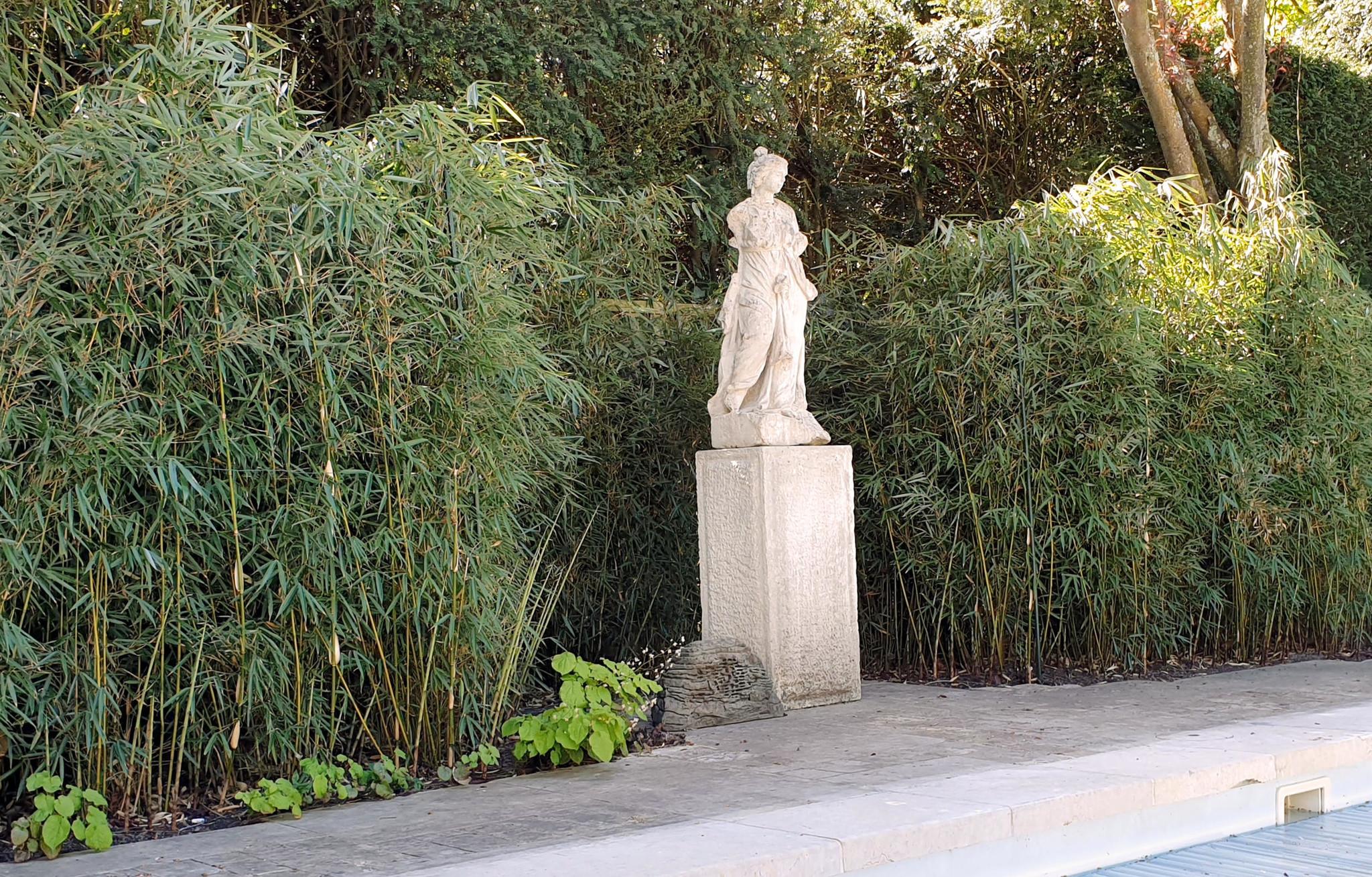 Niet giftige tuinplant Bamboe