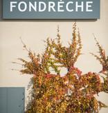 Fondrèche, Côtes du Ventoux wit, 2019