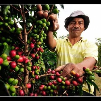 Mexico - Chiapas Bio Fairtrade (100% Arabica)