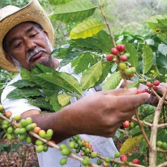 Nicaragua - Maragogype (100% Arabica)