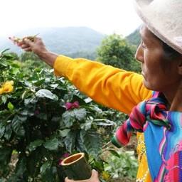 El Palto, Peru, Bio Fairtrade
