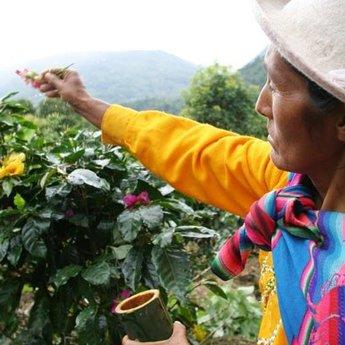 El Palto, Peru, Bio Fairtrade, 100% arabica