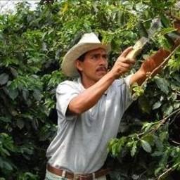 Marcala Honduras Bio Direct trade