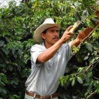 Marcala Honduras, 100%arabica, washed
