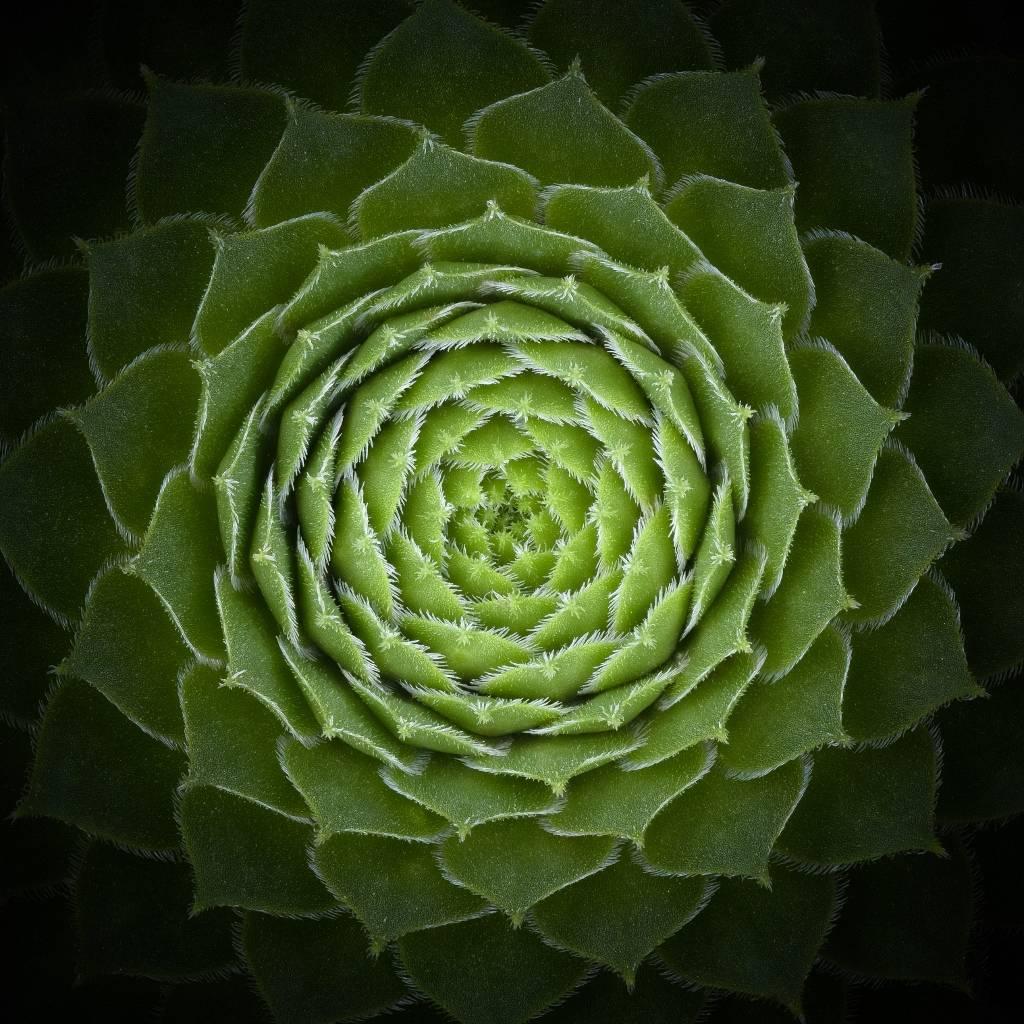 Umo Art Gallery Succulent