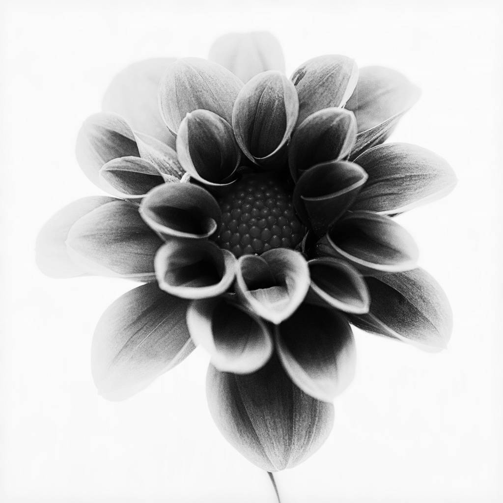 Umo Art Gallery Dahlia