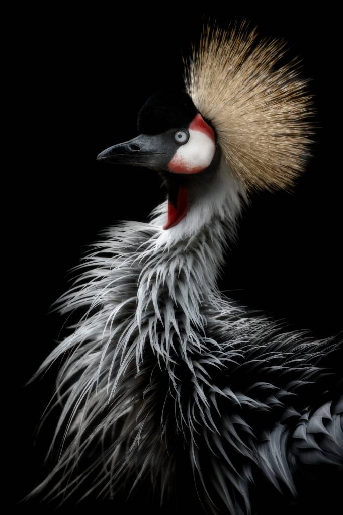 Umo Art Gallery Crowned crane's portrait