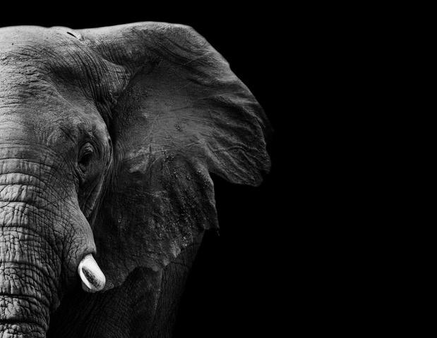 Umo Art Gallery Elephant