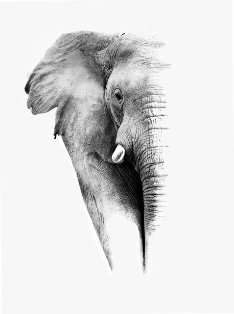 Umo Art Gallery Elephant in White