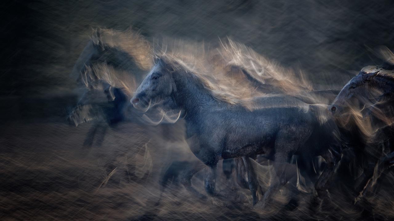 Umo Art Gallery On gallop
