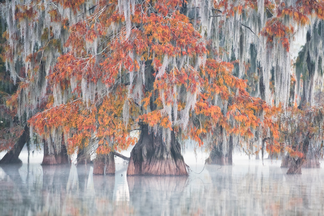 Umo Art Gallery Swamp Cypress