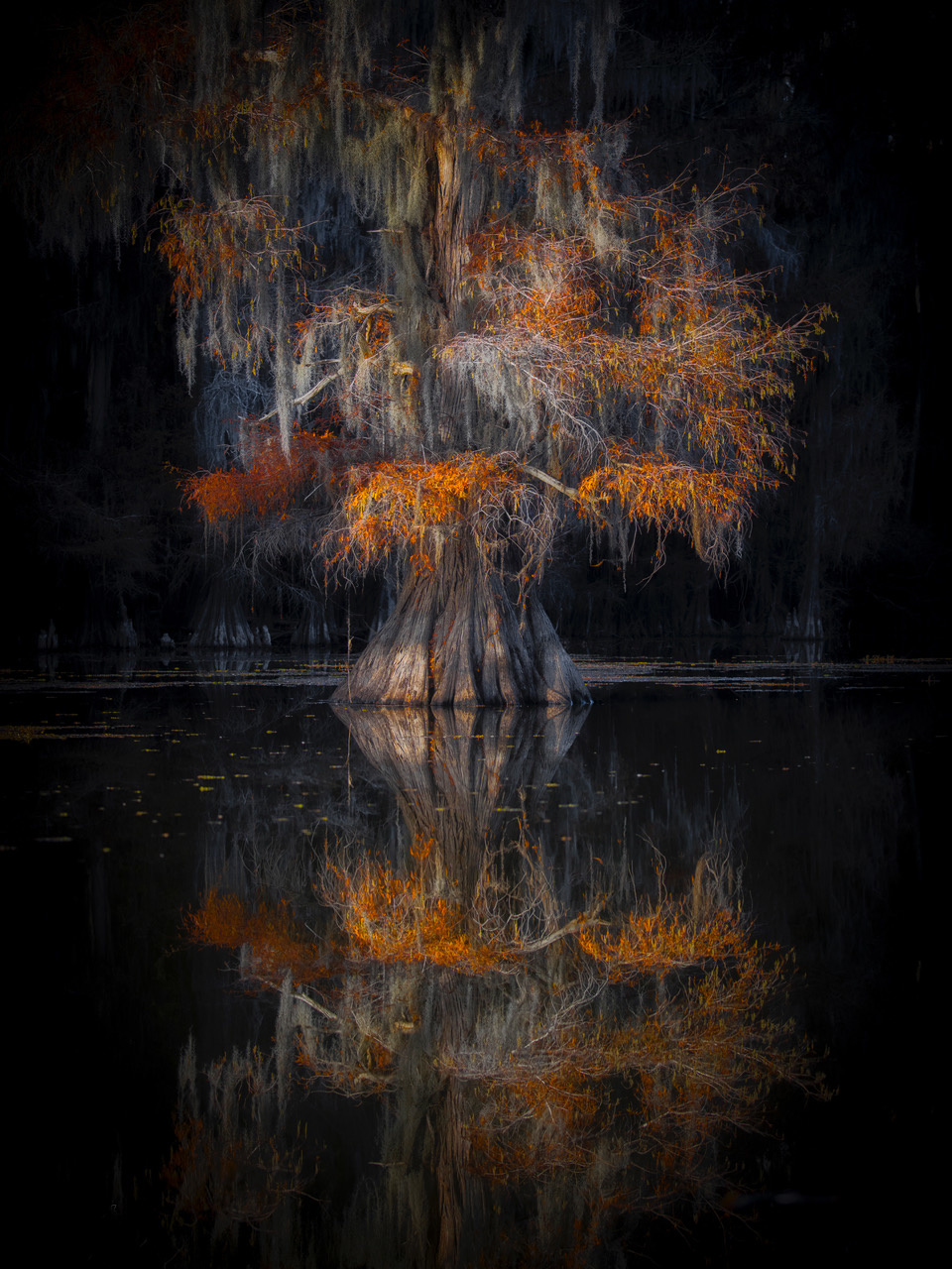 Umo Art Gallery Cypress Reflection