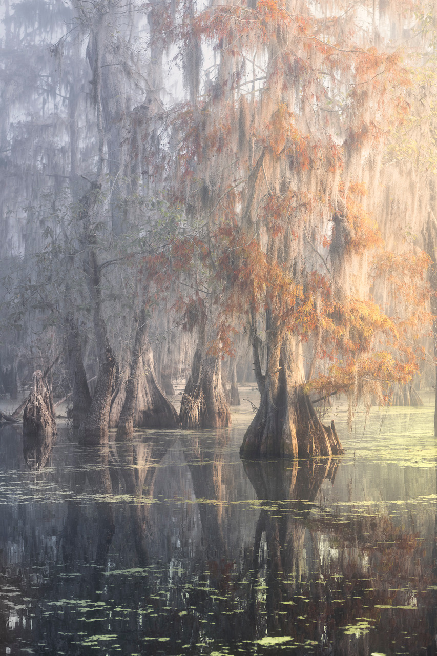 Umo Art Gallery Louisiana Swamp