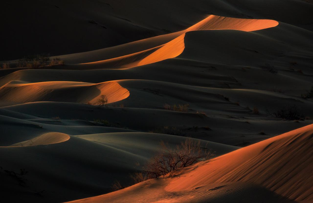 Umo Art Gallery Desert presence