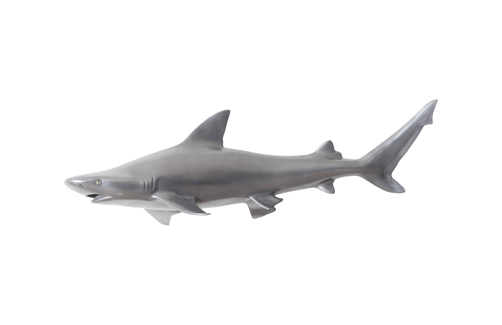 Umo Art Gallery Black Tip Reef Shark