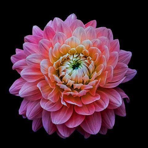 Umo Art Gallery Pink Flower