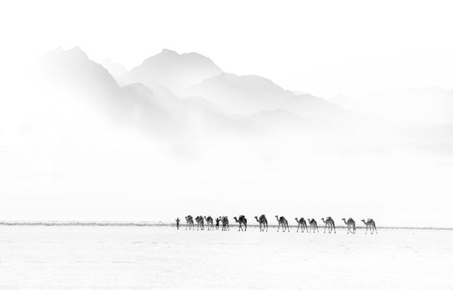 Umo Art Gallery Camel Caravan