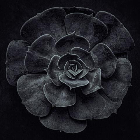 Umo Art Gallery Cactus flower