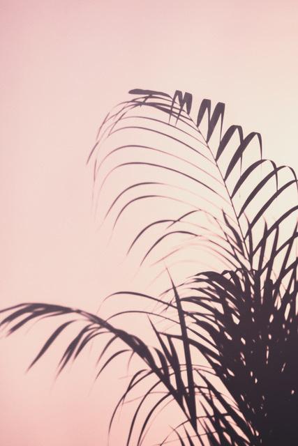 Umo Art Gallery Palm Leaves_1