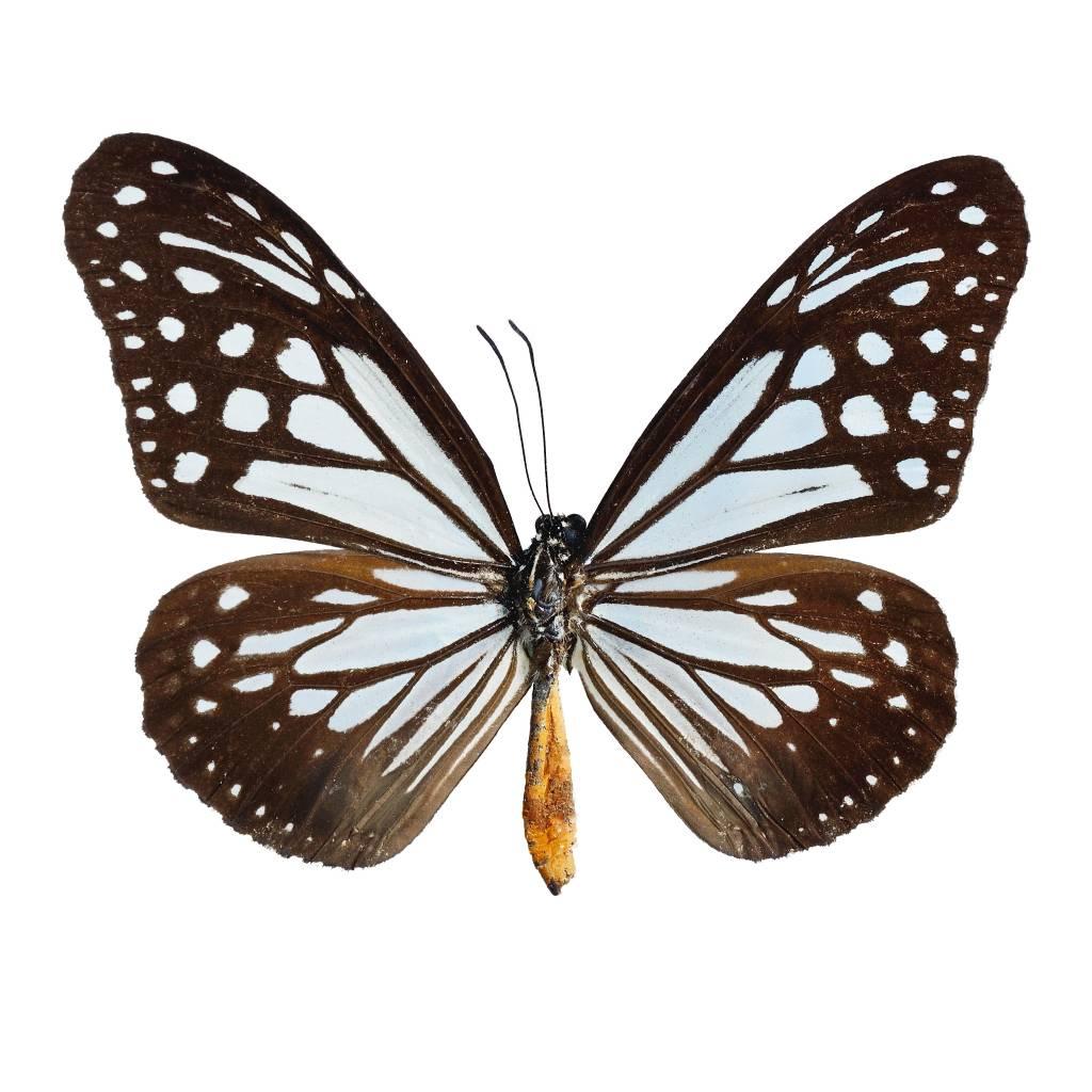 Umo Art Gallery Butterfly