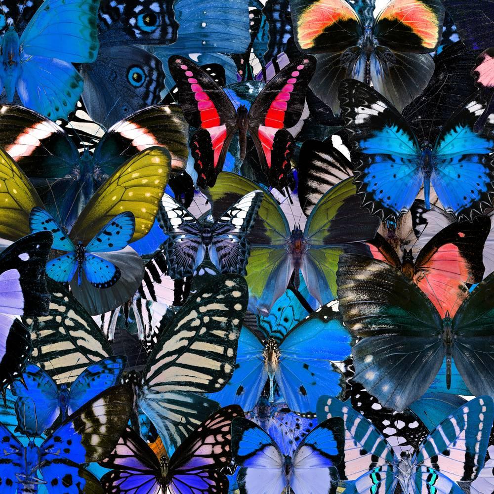 Umo Art Gallery UA-SS299016644