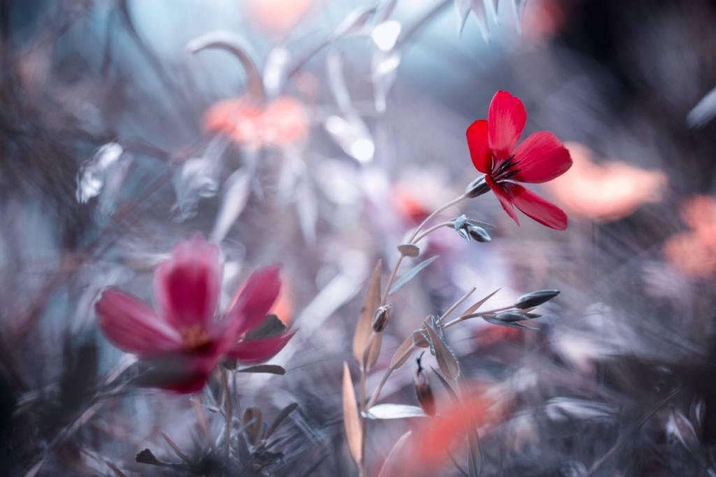 Umo Art Gallery Une Fleur, une Histoire
