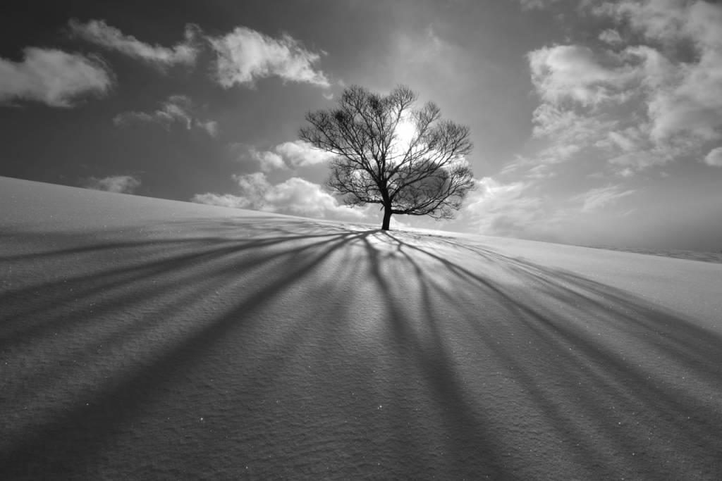 Umo Art Gallery Tree Shadow