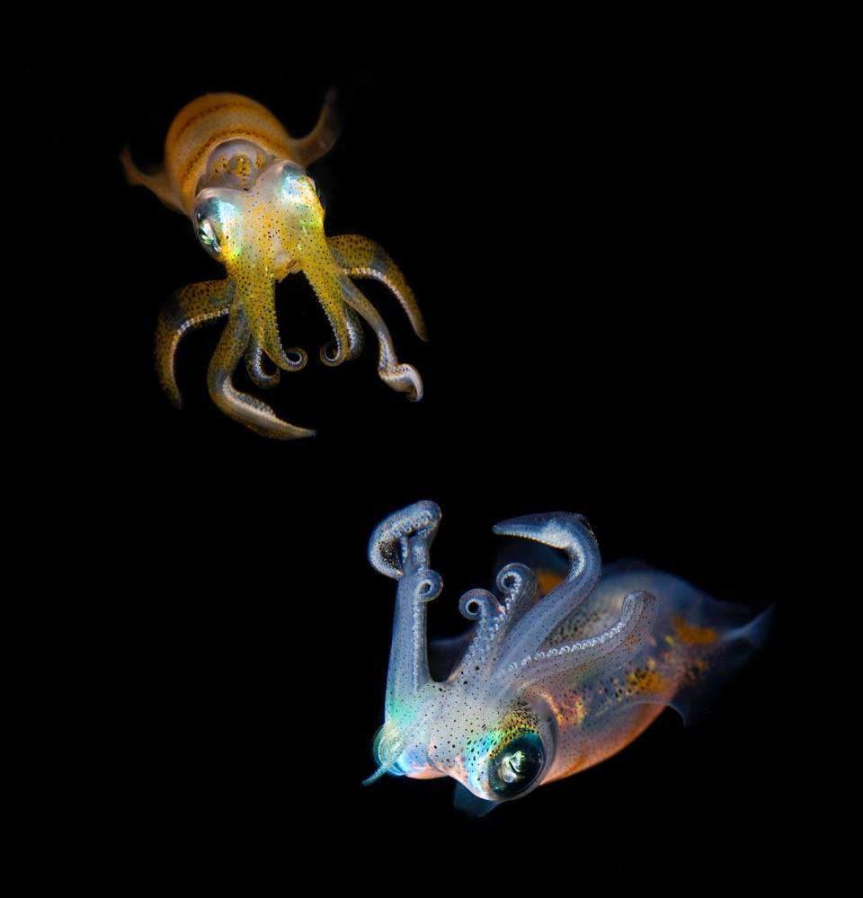 Umo Art Gallery Sea Jewels
