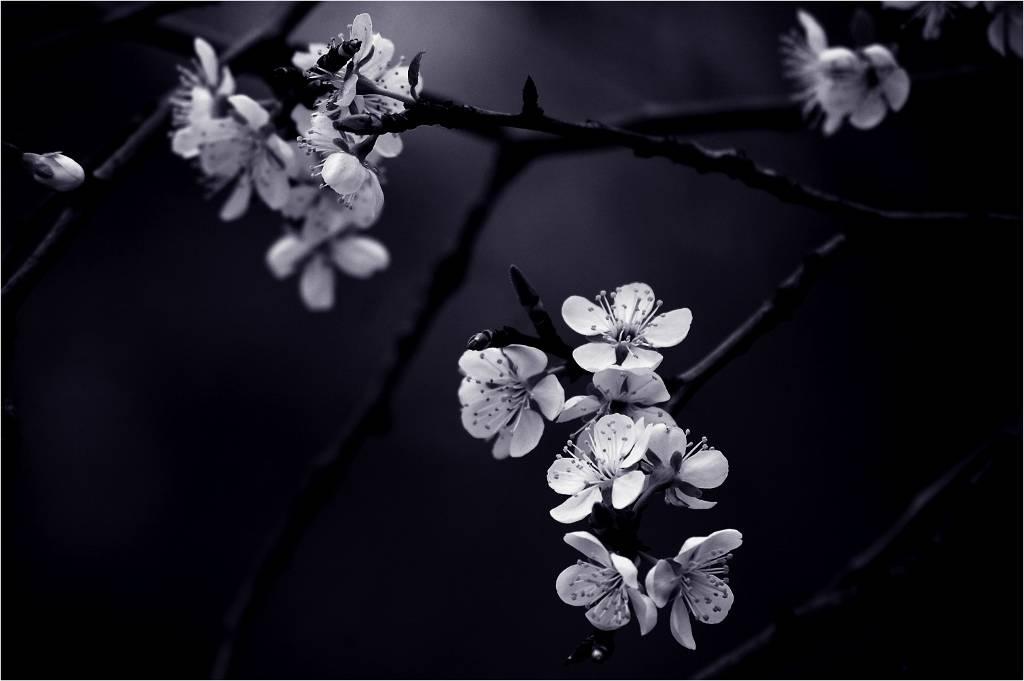 Umo Art Gallery Petite Fleur de mes nuits