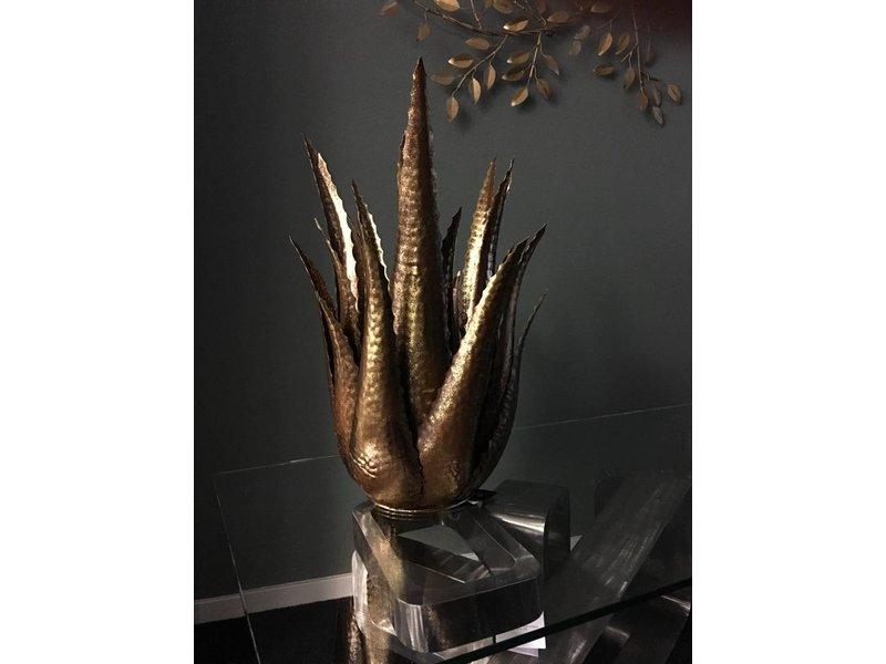 Rasteli Decorative Agave ornamental plant