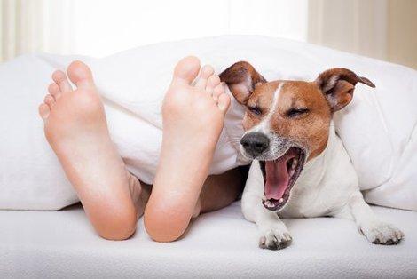Hond in je bed.