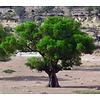 Arc en Sels Biologisch Serum van Argan- en Cactusvijgolie