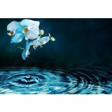 Flowerwaters