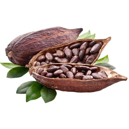 HolyFlavours Kakaobohnen Rohkost Bio