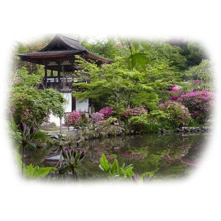 Naturaplaza Matcha Tee-Schale Nara