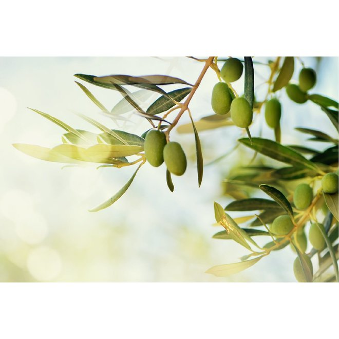 Premium extra vierge olijfolie 500ML