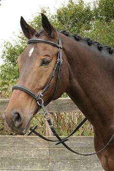 Bittless Bridle Harrys Horse