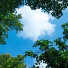 Fotodruckbild Wolken und Wälder 60x60cm für 1x 60x60cm Led-Platte