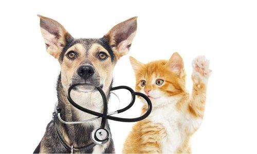 CBD voor huisdieren