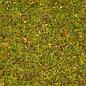 """NOCH Noch 08330 Strooigras """"Bloemenweide"""", 2,5mm, 20g"""