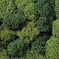 NOCH Noch 08610 Lichen, light and dark green, 35g