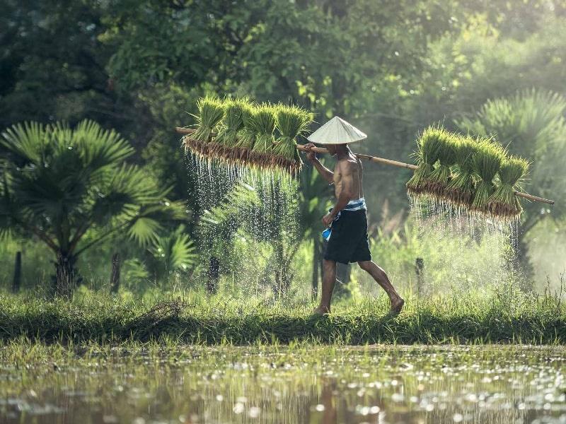gezonde rijstsoorten