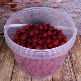 Kostra Baits Premium Boilies Strawberry 2.5 kg