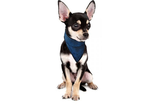 Aqua Coolkeeper Cooling Pet Bandana Small